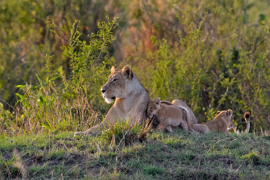 12. Time with mum by Marc MOL