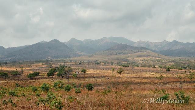 Padang rumput di Maumere