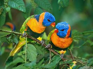 %D8%B7%D9%8A%D9%88%D8%B111 صور رمانسية طبيعية لأجمل الطيور 2014