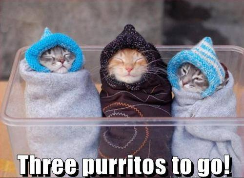 Three Purritos To Go!