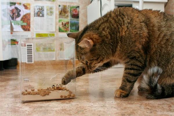 Кормушки для кота своими руками
