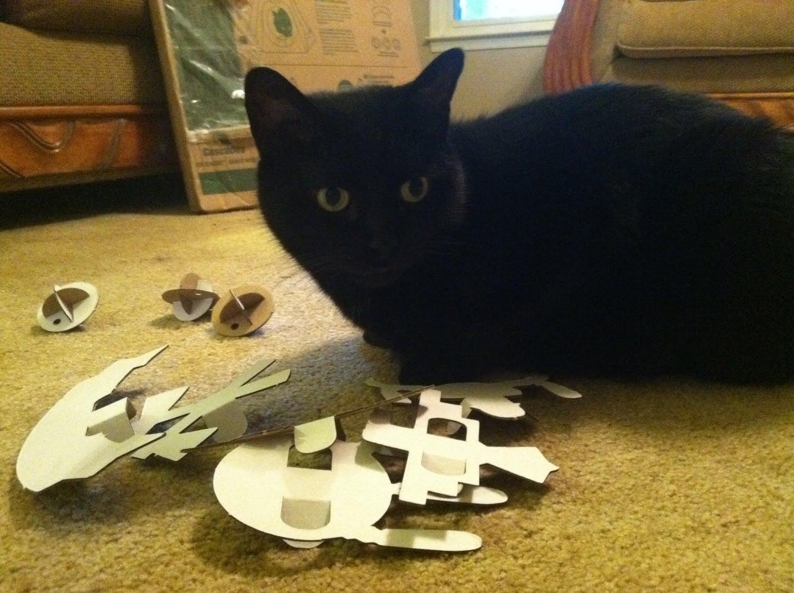 kittens paw prints
