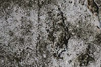 grunge wall texture for free download