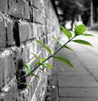 Da ansiedade para a esperança