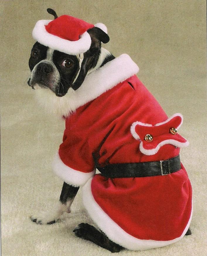 Santa Paws Pet Outfit