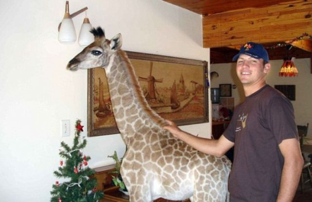 Funny Cool Pictures Pet Giraffe From South Africa