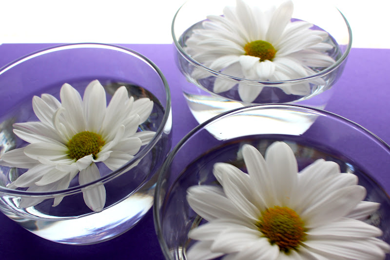 Free to be lea floating flowers Where did daisies originate