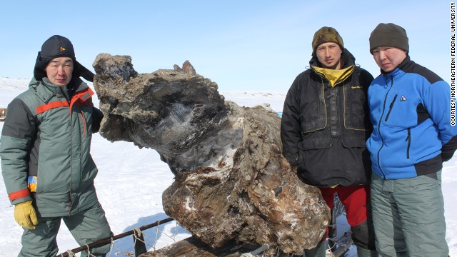 Mammoth To Be Brought To Life? Frozen Mammoth Found With Flowing Blood Possible For Cloning
