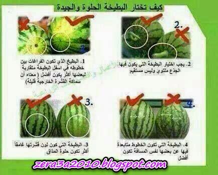 بالصور كيف تختار البطيخة الجيدة