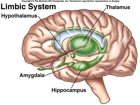Direct school admission dsa interview tips think tank centre the limbic system ccuart Gallery