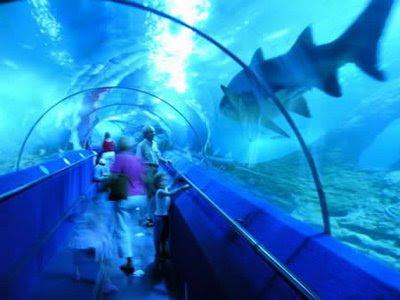 Fascinating in aquarium of western australia