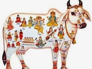 Sacred Cow?