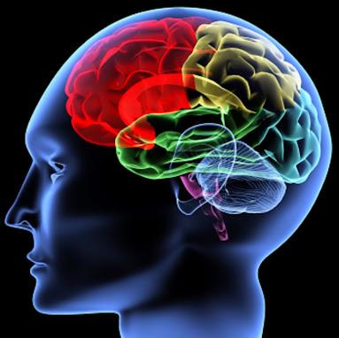 O Nosso cérebro