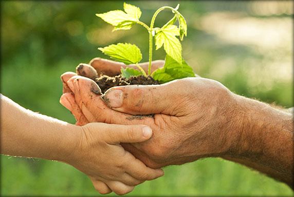 manos para compartir