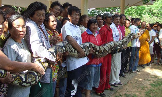 Питон Таиланд