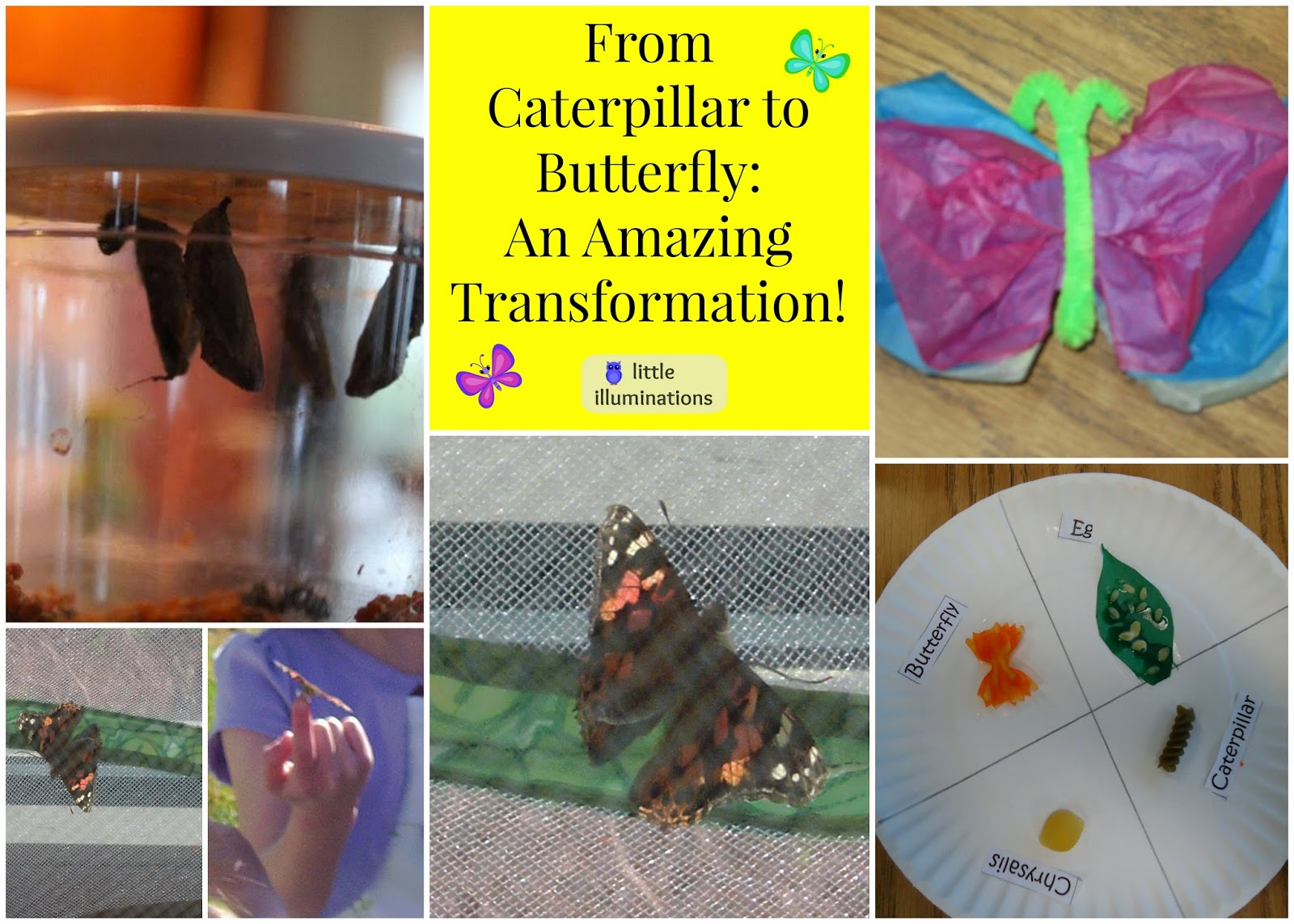 Lidia Butterfly From Caterpillar To An Amazing Transformation