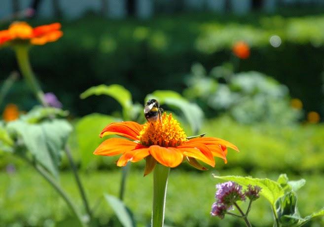 Bi som sitter på en blomma.