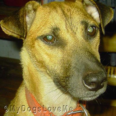 Adopt My Dog Philippines