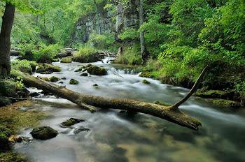 Greer Spring. Photo by schlueterphoto.com