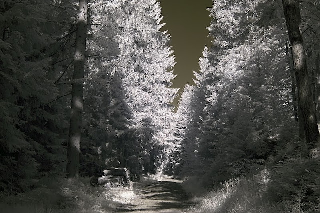 Infrared Photography  forest
