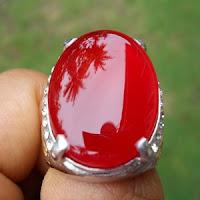 Batu Red Rafesia Fanta Asal Bengkulu
