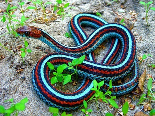 http://www.funmag.org/pictures-mag/animals-and-birds/snakes-pictures-35-photos/