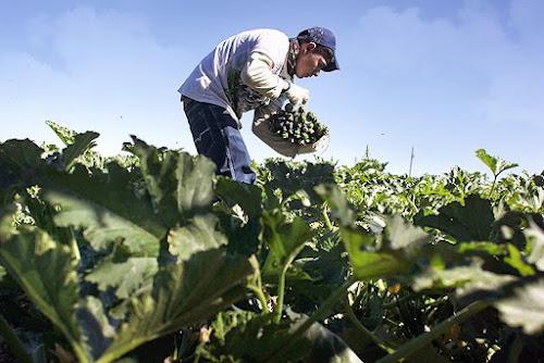 A quantidade de terra dedica à agricultura orgânica nos EUA é agora a maior de todos os tempos