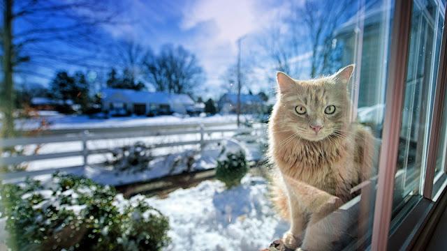 Cat in The Window Snow Winter HD Wallpaper