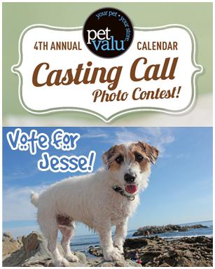 Jesse is a Finalist in the Pet Valu Calendar Contest!
