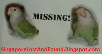 Lost Dogs Pet and Man