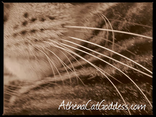 macro image of cat whiskers