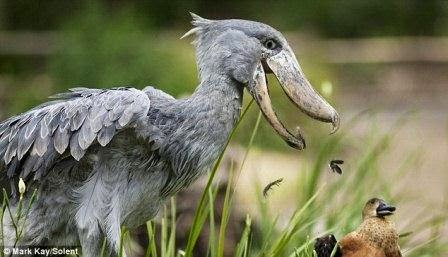 Hewan-Hewan Paling Aneh di Dunia