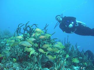 Mergulho em Maria La gorda Cuba