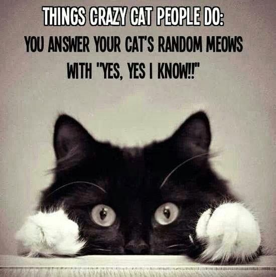 Struggles Only Cat People Will Understand6