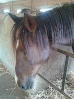 cheval - horse - équitation  - horse riding