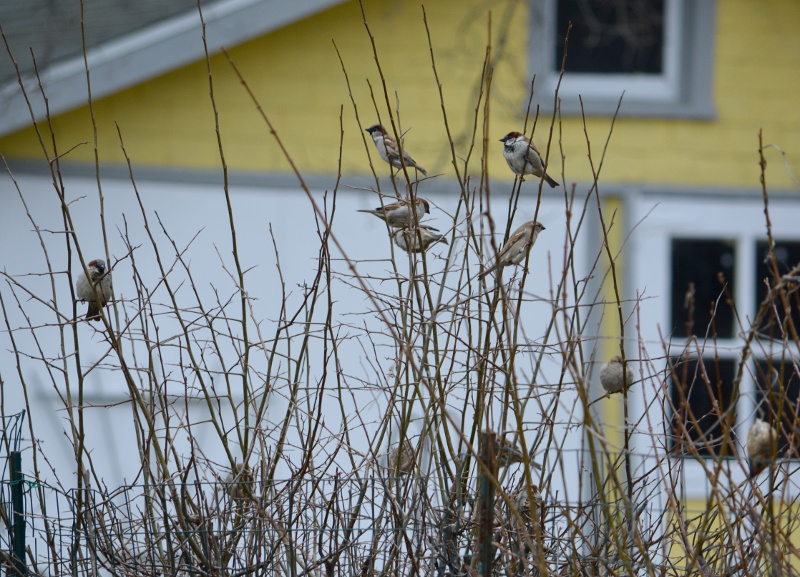cozy birdhouse | sparrows in the bushes