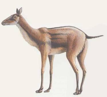 camellos extintos Stenomylus