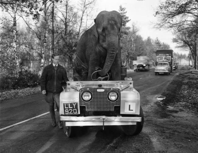 Fotografías antiguas excéntricas y extrañas Vintage+Intelligent+Animals+(25)