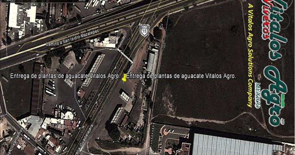 Viveros de aguacate hass venta de plantas de aguacate for Viveros en jalisco