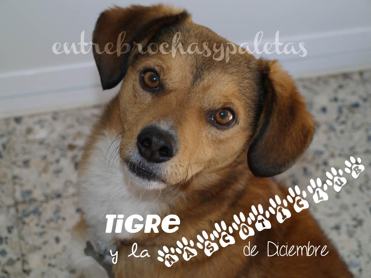 mascotas_perros