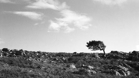 Progetto vajra perle nel tempo immagini foto art gallery incontri meditazione contemplazione zen albero