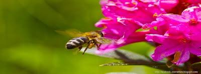 couverture facebook abeille fleur