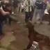Ο βασανισμός σκύλου στην Αίγυπτο που κάνει τον γύρο του κόσμου...