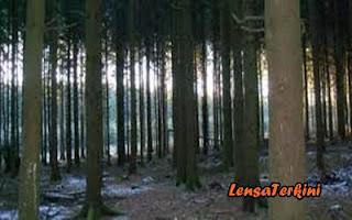 Hutan%2BArdennes.jpg