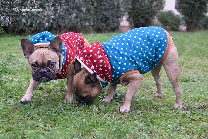 Selbstgenähte Hundejacke für französische Bulldogge