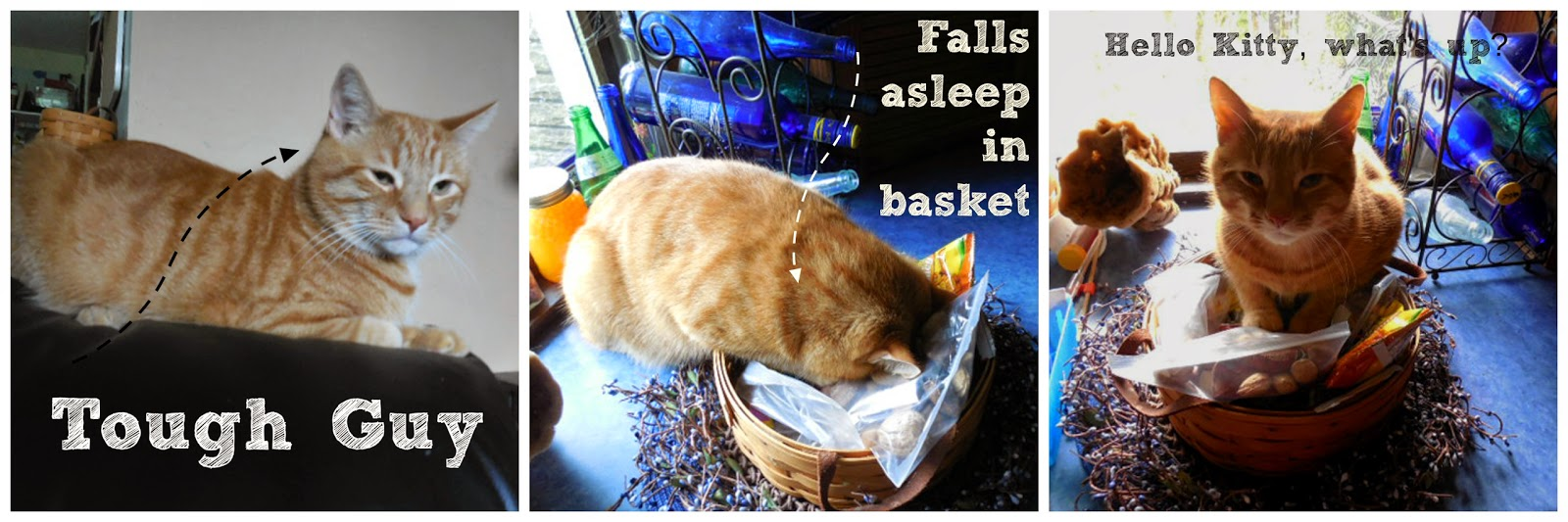 Cat Sleeping in Basket: Caturday Pictures