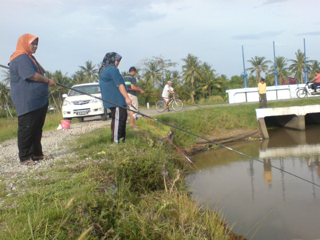 Terajubintang7 Pancing Di Tali Air Bendang Sawah Padi Kg Teluk Bagan Alor Setar Kedah
