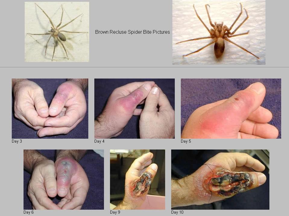 Los animales mas peligrosos del mundo: abril 2013
