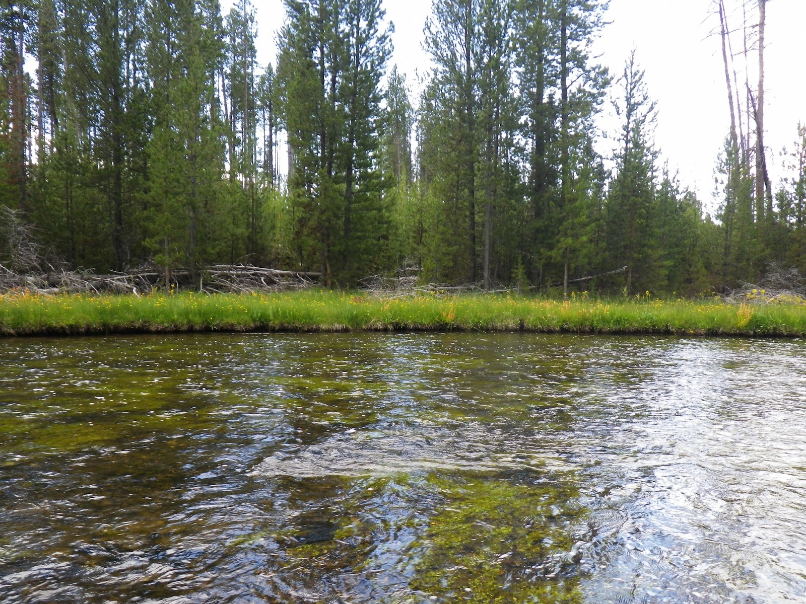 Home waters a fly fishing life the road trip nez perce for Fly fishing yellowstone