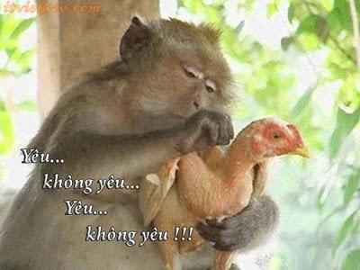 Hình ảnh hài hước, hinh anh hai huoc, anh hai huoc, vặt lông gà yêu không yêu